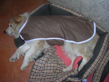 Dog coat - hand made