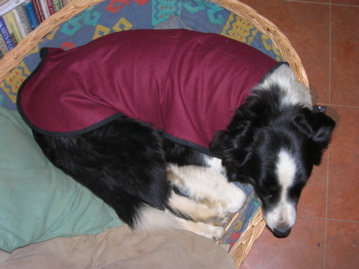 Hand made dog coat