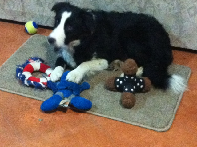 Skye with her toys